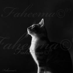 My Kitten by FaMz