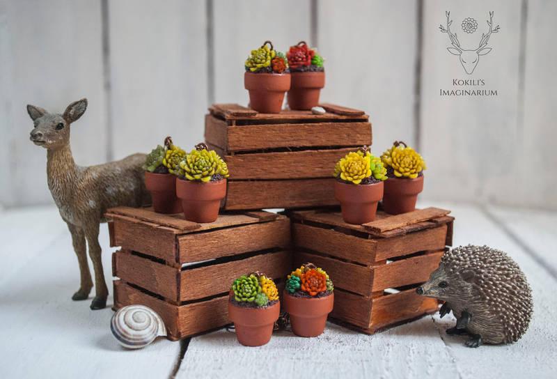 Succulents by Kokili