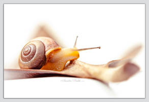 Snail with Gray Border by chalutplease