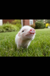 Piggy by damonsgirl26