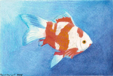 Watercolour Pencil Goldfish by skullmage550