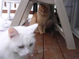 cats by spazmataz