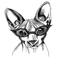 Sphynx Cat by daniellekenyon
