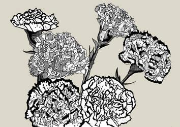 Carnations by daniellekenyon