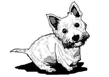 Skie the White Terrier by daniellekenyon