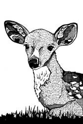 Japanese Sika Deer by daniellekenyon