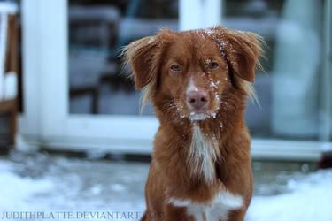 Snowflakes by JudithPlatte