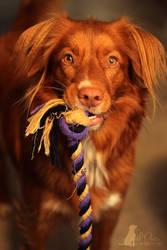 Wanna play? by JudithPlatte