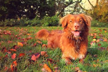 Autumn by JudithPlatte