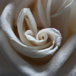 Rose Heart II by MEP4Photography