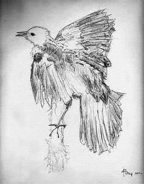 Bird (ballpoint pen) by assignation