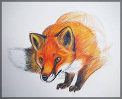 Red Fox Sketch by PoonieFox