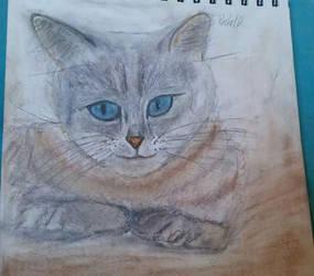 Arya Kitty by Rachabelle