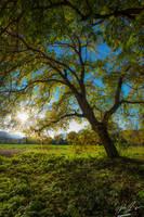 Autumn tree II by Mioko001