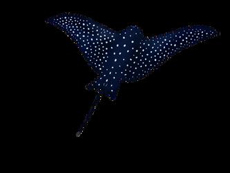 waterbird by FatefulFox