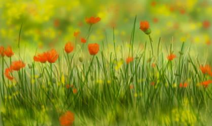 Poppy Field by FoamBubbles