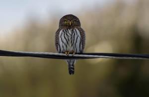Bird  on a wire by Princess-Bihun