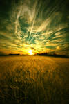 Field of Light by No0o0r