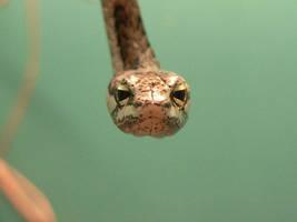 Twig Snake by ntatepaul