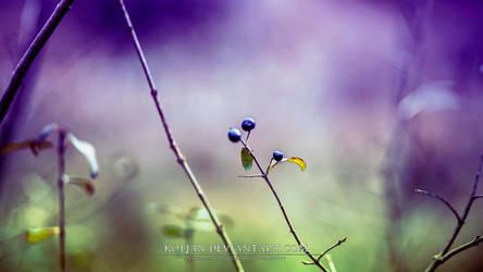 Small purple berries by Koljan