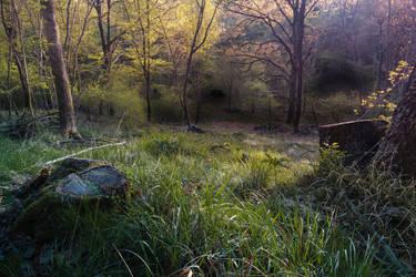 Dusk in the woods by Koljan