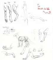 Dragon anatomy by elen89