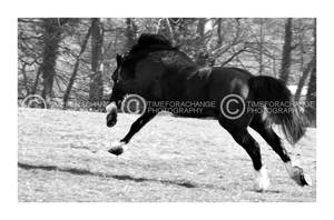 Manic Gallop Moment by timeforachange