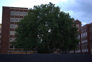 Cornered Tree by TheConstructor