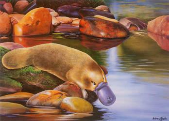 Platypus by Andrew-Patsalou