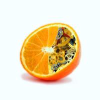Clockwork Orange by wickedsteve
