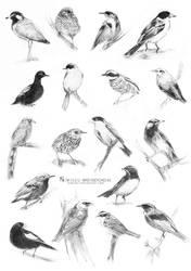 Bird Sketches #2 by Nimiszu