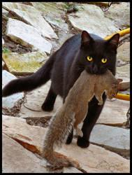 Got Squirrel by charfade