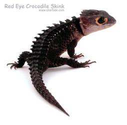 Red Eye Crocodile Skink by charfade