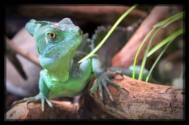 Basilisk lizard by charfade
