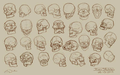 30 - 2min Skull Studies by charfade