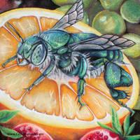 Bee on a orange chalk art by charfade