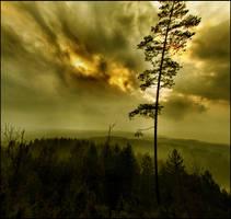 spell forest .. by KariLiimatainen