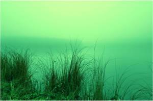 swamp colours .. by KariLiimatainen