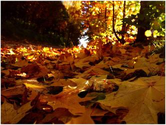 maple leaf . .. by KariLiimatainen