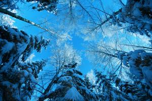 winter ................ by KariLiimatainen