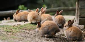 bunny group .. by KariLiimatainen
