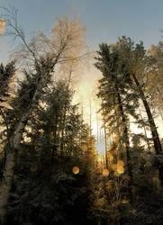 lights in trees by KariLiimatainen