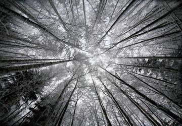 look to the sky by KariLiimatainen