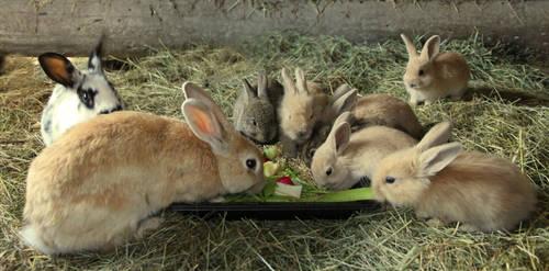 bunny family by KariLiimatainen