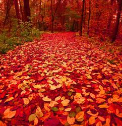 red path II by KariLiimatainen