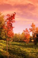 memory's garden by KariLiimatainen