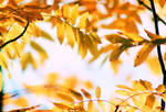 yellow autumn by KariLiimatainen