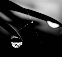 Black and white by KariLiimatainen