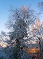 Winter sunset by KariLiimatainen