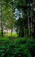 Forest trail II by KariLiimatainen